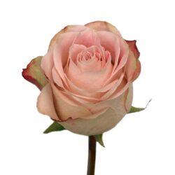 Роза Upper Secret