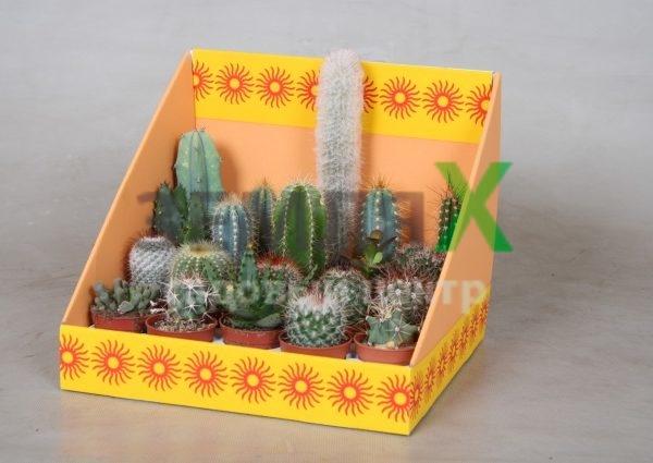 cactus-gem