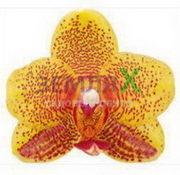 Орхидея Charming