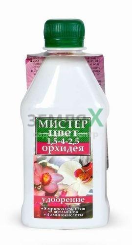 """""""Мистер цвет"""" орхидея"""