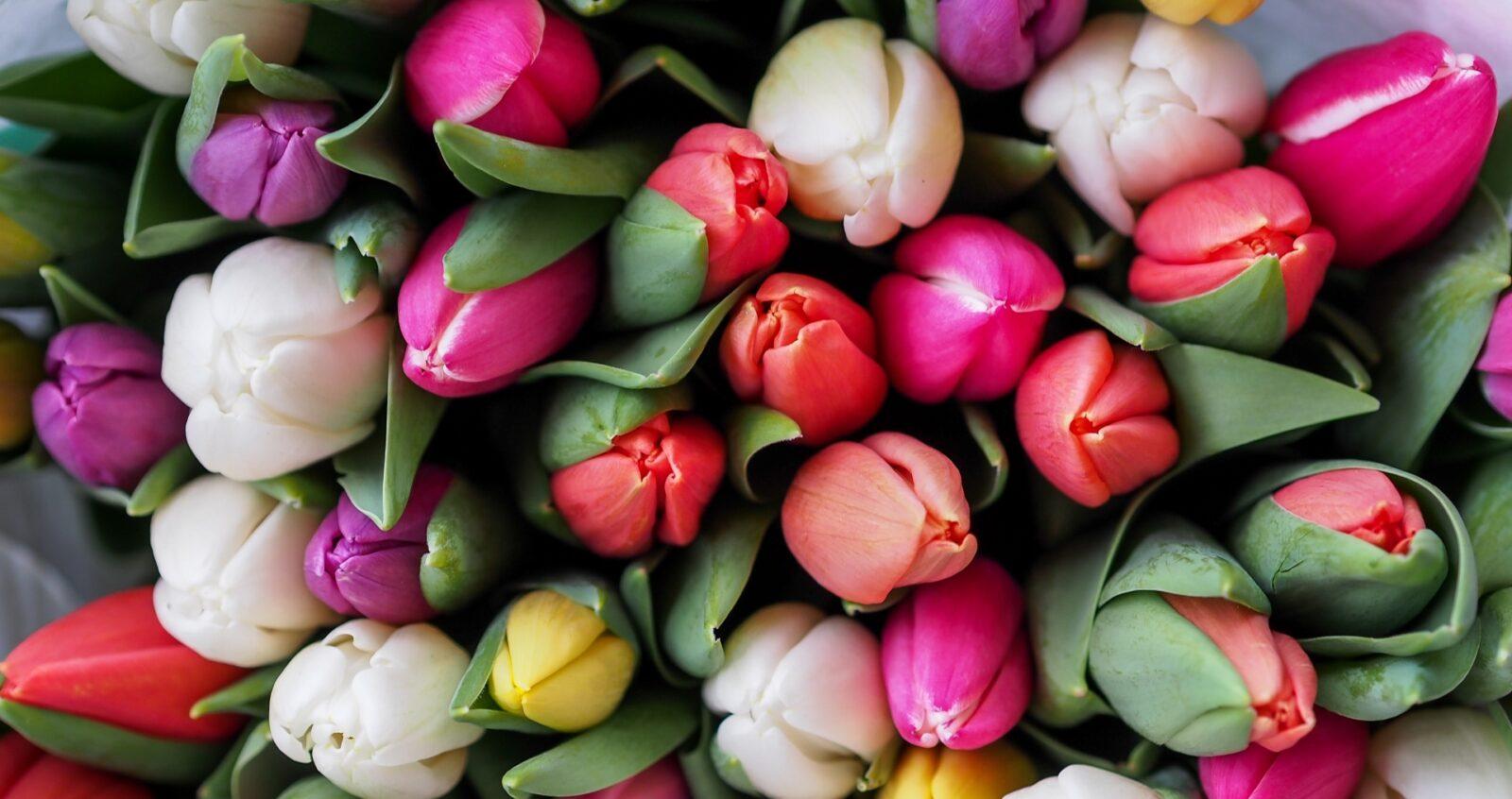 Весенние цветы на день влюбленных