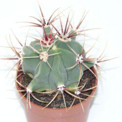cactus-59893_960_720