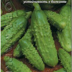 golubchik